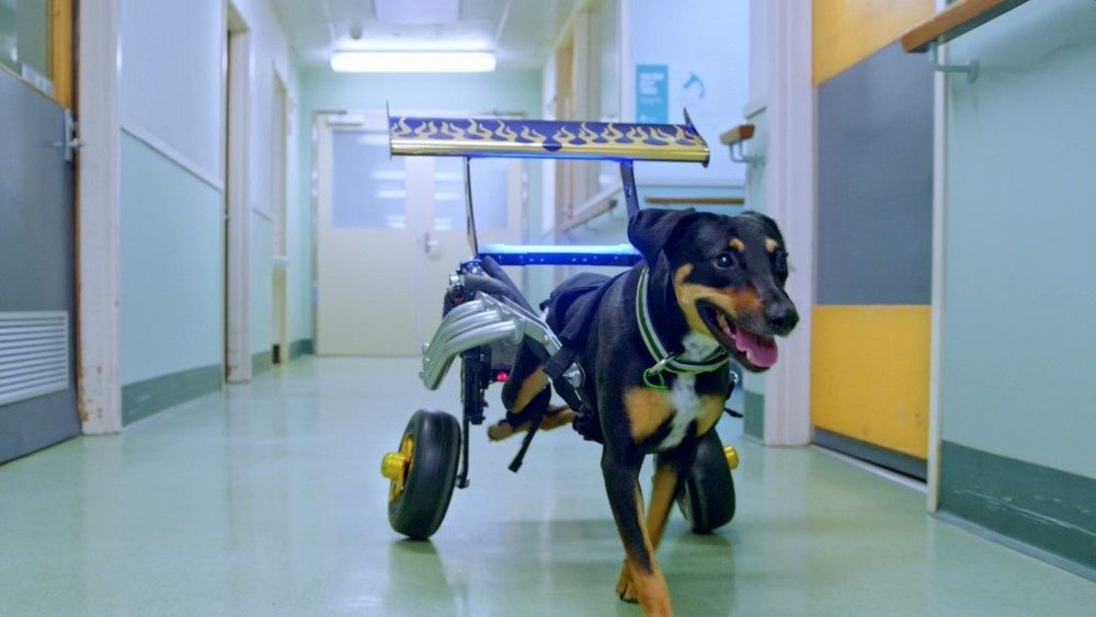 Body image for Animal Hospital meets Fast & Furious in RACV pet cover campaign