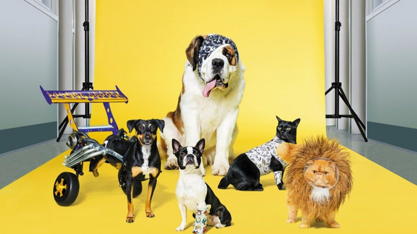 Header image for article Animal Hospital meets Fast & Furious in RACV pet cover campaign