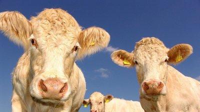 Arla's cow's life app shows off happy herd to dairy sceptics